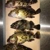 四日市  根魚