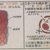 【生理学Ⅰ-10】毛細血管について