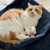 洗濯したばかりのソファカバーにお邪魔猫さんが襲来!抜け毛だらけに…