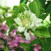 写真保存を兼ねたブログ 5月徒然 初夏の庭