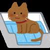猫のトイレの型はどういうのがある?トイレの型と型ごとのオススメ