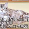 【英語】猫が飼い主に対して思っている事(動画でリスニング練習)
