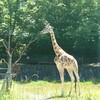 東山動物園その3