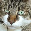 【環境】アットホームとは:愛犬愛猫と暮らす【住居】