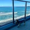 愛犬と夏を満喫!レジーナリゾート鴨川でプール遊び