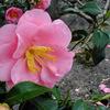 沙沙貴神社の花たち