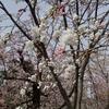 つかの間の花園 春爛漫