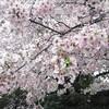 上野で花見!酒の肴は御徒町の吉池で集めろ!