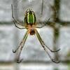 蜘蛛^^;