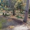 落葉掃除、メンブリオなど