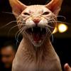 野良猫撃退!糞を防ぐ猫が嫌いな臭いランキング
