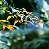 京の花見 その2