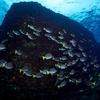 海の生物の進化って独特過ぎない?って話