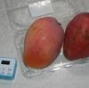 夏バテ寸前。そこに注入されたマンゴーの美味しかったこと!