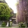 【武蔵寺】隠れた藤の名所!太宰府からも近い!福岡県・筑紫野市にある九州最古のお寺