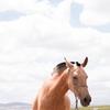 Amazonプライムの新しいCM「馬とポニー」。これがまた泣けると話題