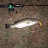 日常に釣りを!