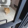 猫さんの脱走防止策~玄関編