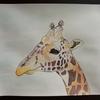 水彩画36枚目「キリンの上にシマエナガ」