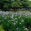 平安神宮の神苑無料公開【2019年版】