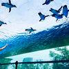空飛ぶペンギンに会いに 池袋「サンシャイン水族館」へいってきました