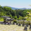 霊園風景 その55   「‥柔らかな 若葉たちへ」
