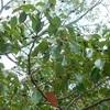 アカトンボとどんぐりを探して~葦毛湿原