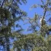 光ヶ丘公園で夏鳥探し 2021年4月11日