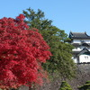 大嘗宮一般参観と乾通り一般公開見学へ④『宮殿・宮内庁庁舎・紅葉と富士見櫓』