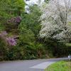春の野草&木の花 〜今週の荒神山 〜