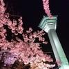 夜桜です。そしてブックマークができない。。。と思っていたらできるようになりました。笑