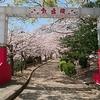 須磨浦山上遊園の「敦盛桜」を見てきた(自力)