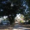連休8日目 毎月行っている佐野市田沼の一瓶塚稲荷へ。