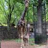 【上野動物園】客寄せパンダにだまされてはいけません。今アツいのはコチラ!!【予約制で再開しました】