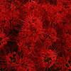 明日香村の彼岸花と東大寺