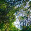 木の枝木の葉絡み合い 秋の衣の機を織る