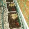 平成最後の土砂降りの前に色々と植え付ける