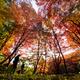 《撮影記》鶏足寺(旧飯福寺)の紅葉