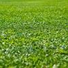 隣の芝生が青く見えたのなら…