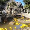 正月恒例伊豆シャボテン公園でカピバラ詣