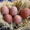 マジで世界が変わる!一度食べてみてほしい高級卵おすすめ6選!