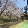会社のテニスサークルの練習会に行く。桜が満開!
