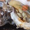 【板前レシピ】牡蠣(かき)/岩牡蠣(いわがき)/開け方/食べ方