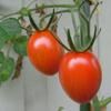 野菜収穫とBBQ