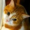 るーくんの乱!愛猫の凶暴化