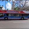 お得!便利!ハバナ・バス・ツアー