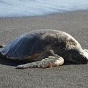 海亀のつぶやき