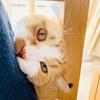 愛猫とシャイニングごっこ。