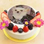 東京<千代田区・台東区・文京区・墨田区>でオリジナルの写真ケーキが購入できるケーキ屋さん3選