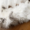 猫背を忘れた猫 ーPart2ー